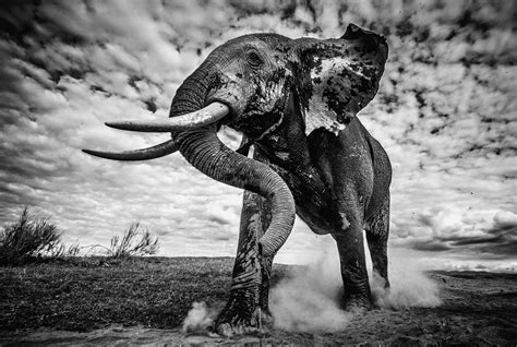 finalists africa geographic photographer   year