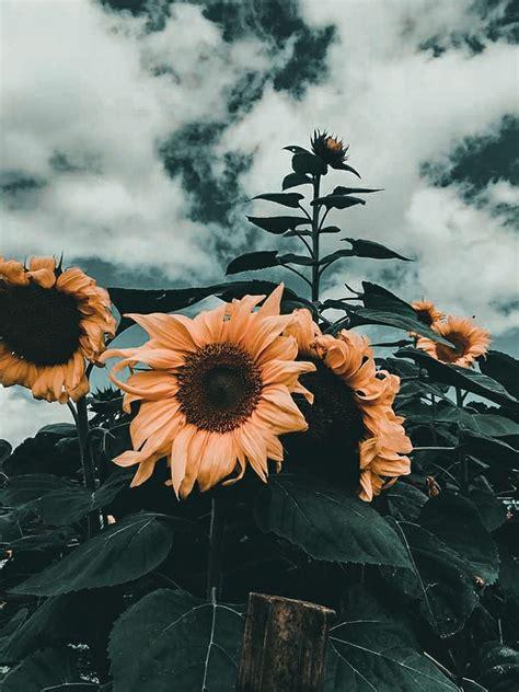 wow  foto bunga aesthetic gambar bunga hd