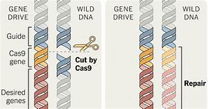 Gene Drives Offer New Hope Against Diseases and Crop Pests ...