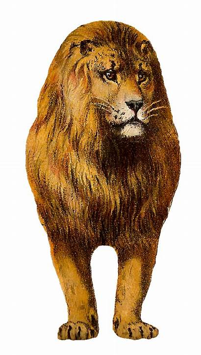 Lion Clipart Cliparts Clip African Animal Graphic
