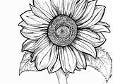 Coloring Pages Adults Sunflower Drawing Printable Line Simple Young Clipartmag Getdrawings Getcolorings Print sketch template
