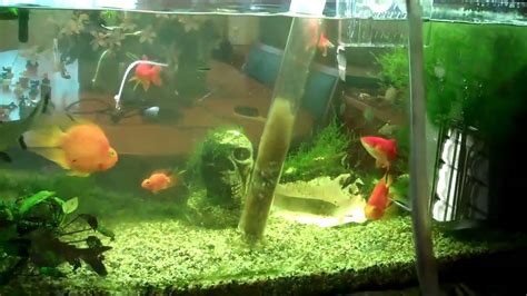 how to clean a fish tank 5 tips on how to clean a fish tank properly stay at home mum