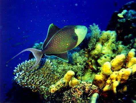 Great Barrier Reef, One Of The Seven Natural Wonders Of The World | New Stylish Wallpaper