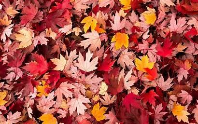 Leaves Autumn Toamna Poze Fall Macro