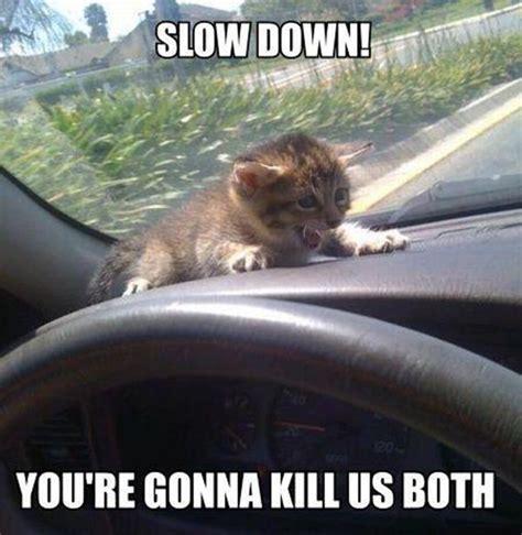 Funny Memes Animals - 30 funny animal captions part 5 30 pics amazing creatures