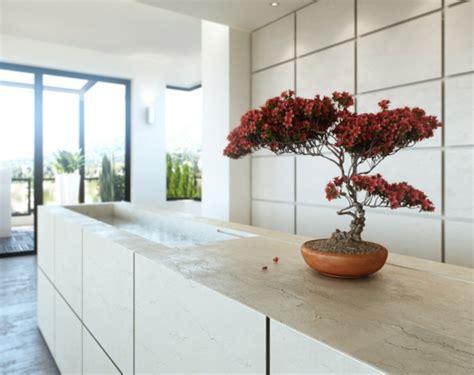 plante cuisine decoration décoration intéressante avec bonsaï quelques idées