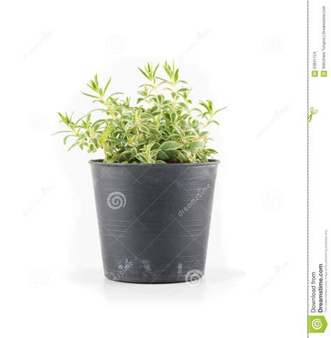 le pot d etain danjoutin usine succulente dans le pot d usine photo stock image 63841724