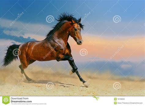 running horse   desert stock photo image  nature
