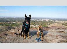 Dog Friendly Hiking in Boise Table Rock
