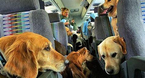 cani in cabina aereo aerei s 236 ai cani in cabina con delta parte la rivoluzione