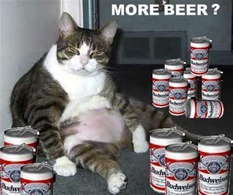 images  drunk cats  pinterest  beer