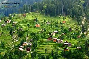Gold Chart Live Forex Management Neelum Valley Azad Kashmir