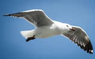 Beach with Seagulls