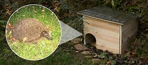 Igel Im Garten : der herbst ist da und der igel im garten auchblog gardigo ~ Lizthompson.info Haus und Dekorationen