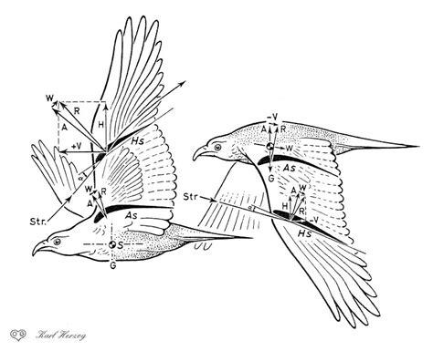 ornithopters fly erich von holst  karl herzog