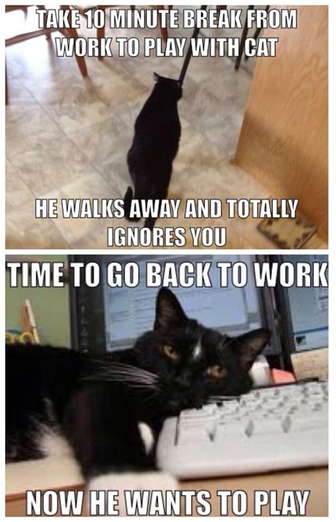 Mere Cat Meme - 507 best images about funny cats on pinterest cats funny cat pictures and kittens