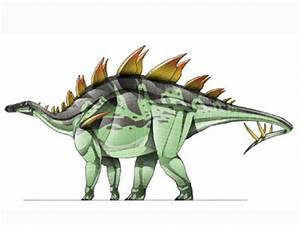 Loricatosaurus | Dinopedia | FANDOM powered by Wikia