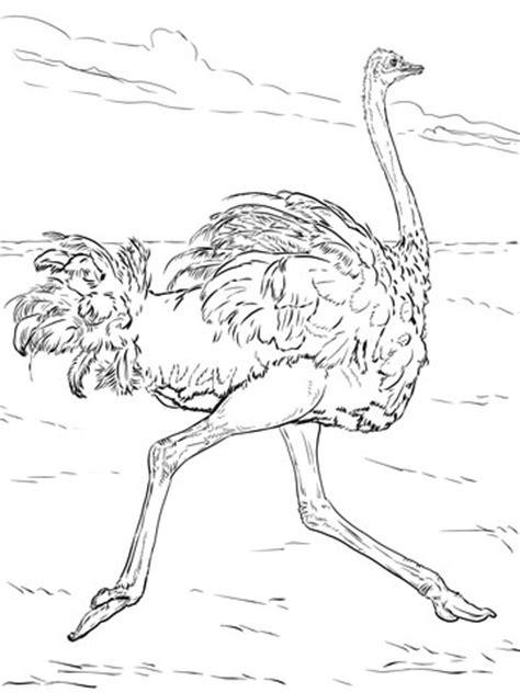ostrich runs coloring page supercoloringcom