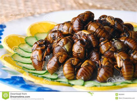 delicious cuisine china delicious food fried cicada stock image image of