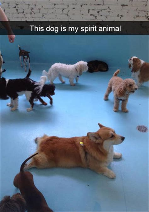 behold  funny dogs  snapchat  pics