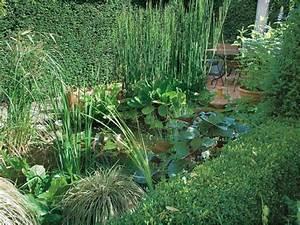 Plante Pour Bassin Extérieur : l 39 installation d 39 une plante au bassin ~ Premium-room.com Idées de Décoration