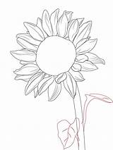 Sunflower Drawing Sunflowers Draw Drawings Sun Cartoon Simple Pencil Template Flowers Step Getdrawings Leaves Sketches Doodles Leaf Perfect Circular sketch template
