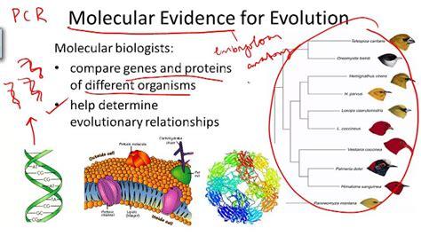 Evidence For Evolution Ck 12 Foundation