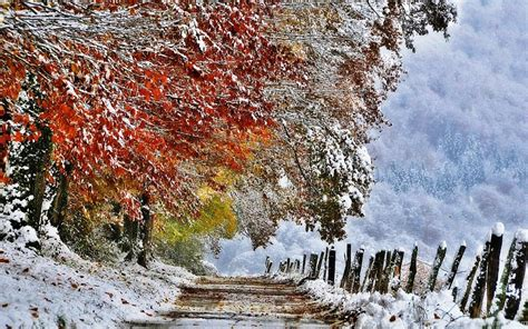 First Snow Hd Wallpapers Hd Wallpaper Backgrounds Of Your