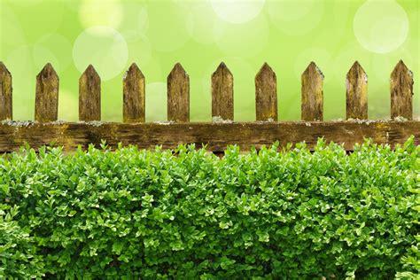 garden box design sichtschutz im garten zaun oder hecke