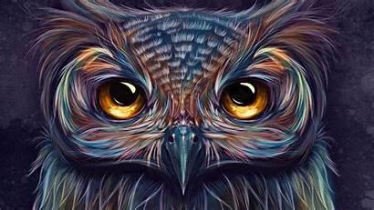 Owl Colorful 4k Artwork Artist Wallpapers Digital