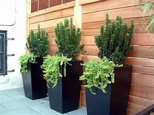 Plantes Grimpantes Pot Pour Terrasse : 4 conseils jardinage pour les plantes en pots ~ Premium-room.com Idées de Décoration