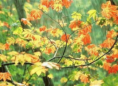 Rain Nature Raining Mother Wallpapers Leaves Data