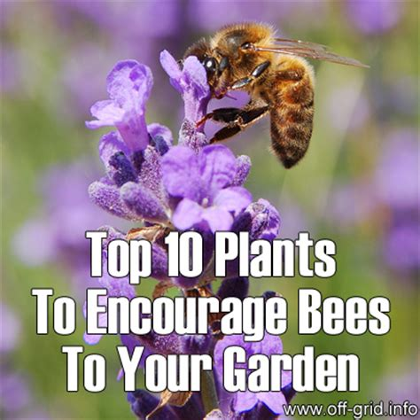 top 10 plants to encourage bees to your garden grid