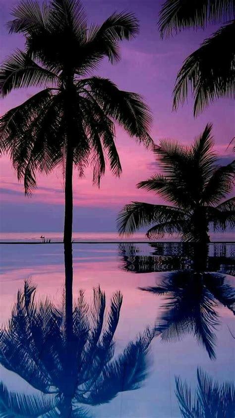 sommer paradise chrissy chrissy paradise sommer