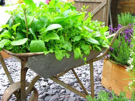 ewa in the garden vegetable garden ideas