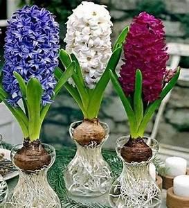 Blumenzwiebeln Im Glas : hoa ti n ng d lan h ng c y c nh hoa c nh bonsai h n non b s n v n ti u c nh ~ Markanthonyermac.com Haus und Dekorationen