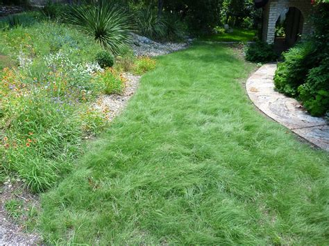 Nature, Grass, Plant, Lawn, Home, Walkway