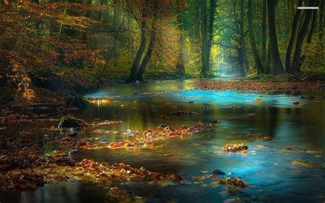 calmy river leaves forest wallpapers calmy river leaves forest stock