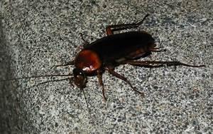 Kakerlaken ähnliche Insekten : auch kakerlaken k nnen faszinierend sein foto bild ~ Articles-book.com Haus und Dekorationen