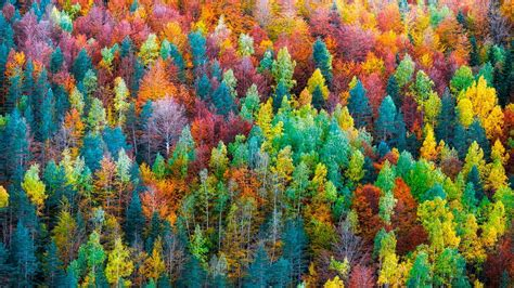 Colourful Autumn Background by Colorful Fall Forest Hd Wallpaper Wallpaper Studio 10