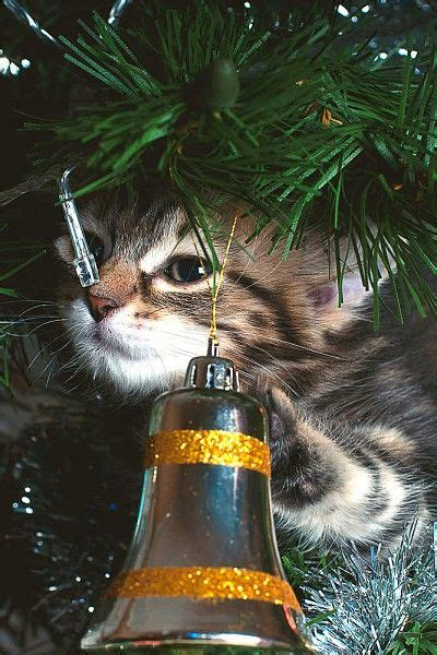 cat proof your christmas tree exploring christmas trees