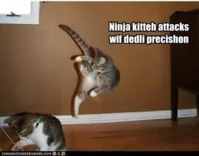 ninja funny cats lol epic killer backflip waste
