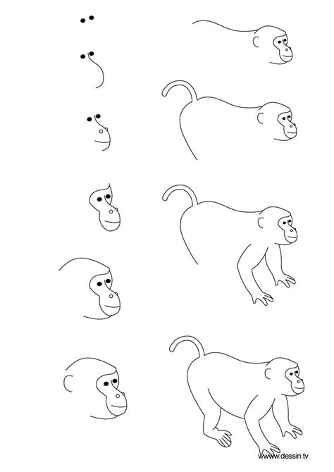 How to Draw a Simple Monkey Step by Step