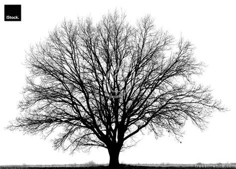 black trees black trees isolated on white trees on white trees on white