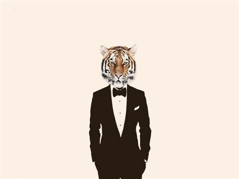 Animals In Suits Wallpaper - animals tiger suits simple background wallpapers hd