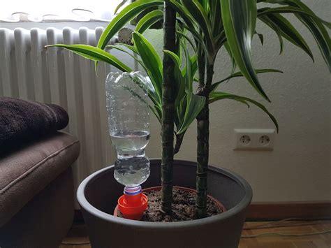 Bewässern Im Urlaub by Pflanzen Im Urlaub Bew 228 Ssern Blumen Im Urlaub Automatisch