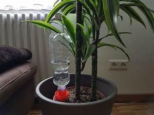 Pflanzen Bewässern Urlaub : das beste bew sserungssystem f r zimmerpflanzen schlauer wohnen ~ Watch28wear.com Haus und Dekorationen