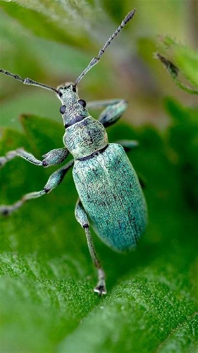 Beetle Insect Wallpapers Greepx