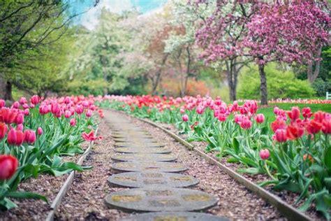 Garden Picture by 1000 Interesting Garden Photos 183 Pexels 183 Free Stock Photos