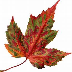 Feuilles D Automne à Imprimer : feuilles automne ~ Nature-et-papiers.com Idées de Décoration